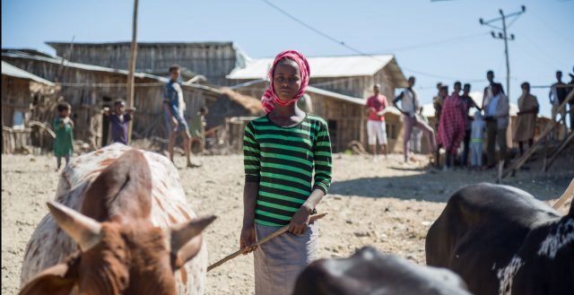 Young adolescent girl herding cattle in Amhara, Ethiopia. Photo: Nathalie Bertrams/GAGE